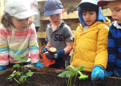 growing-food